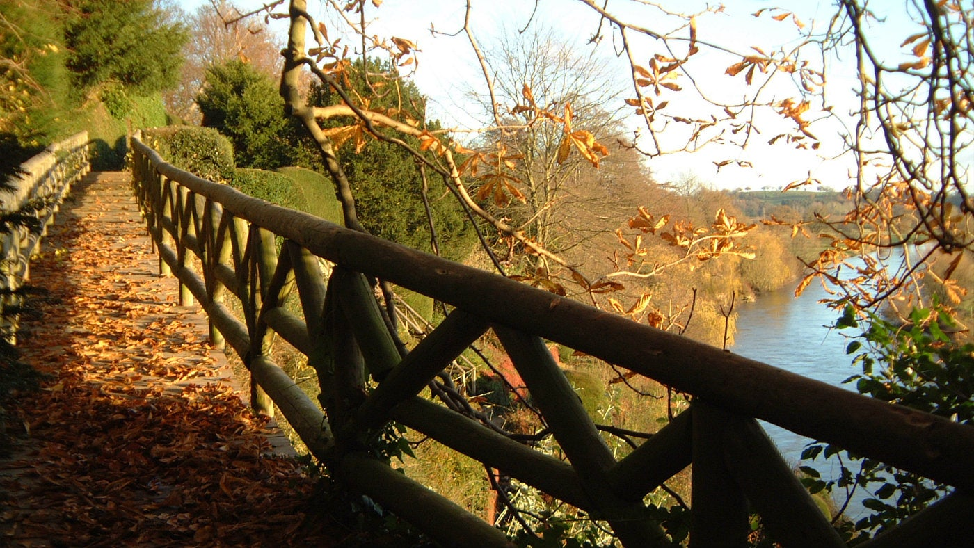 The Weir wooden bridge covered in a carpet of leaves