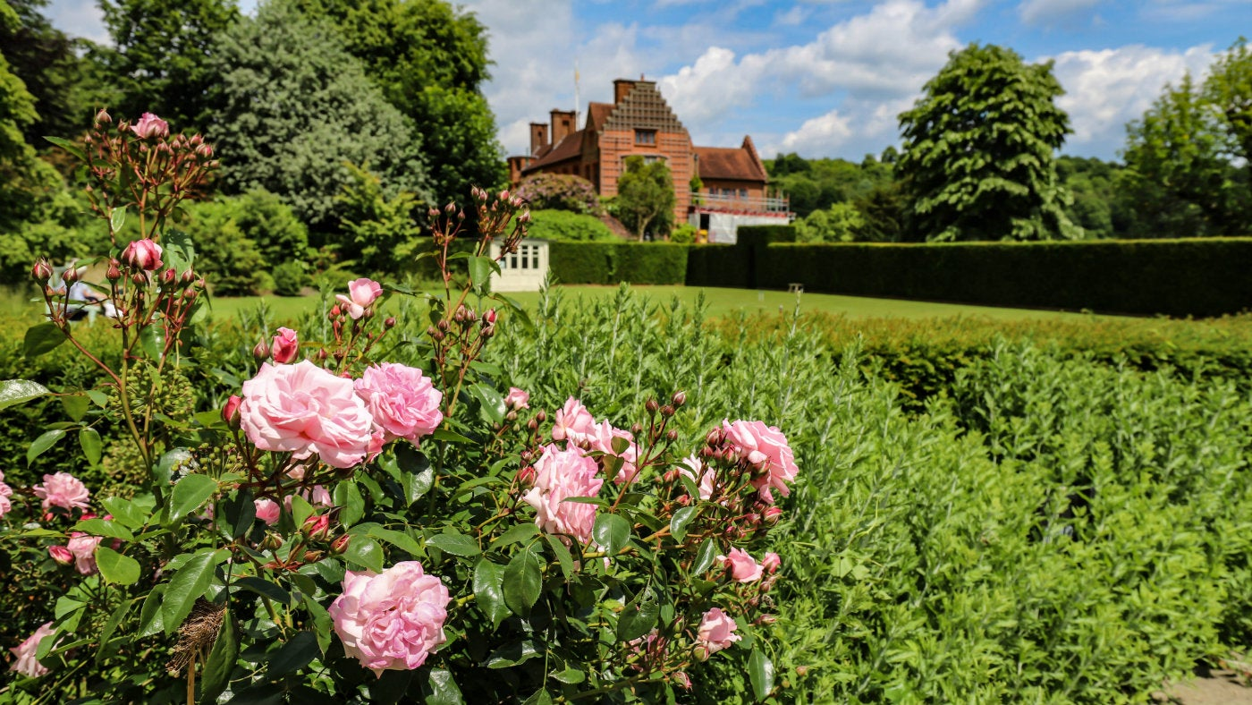 Roses in front of the croquet lawn at Chartwell, a National Trust property in Kent