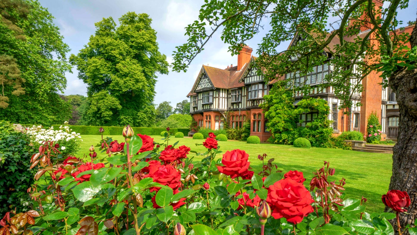 Looking through red roses planted on the south terrace towards Wightwick Manor