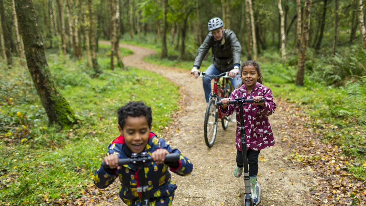 Discover new parts of the parkland on the Woodland Trail at Kingston Lacy