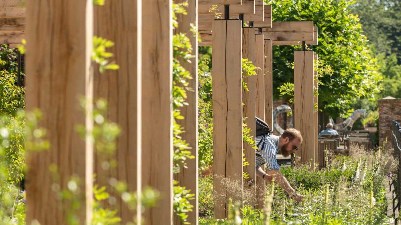 Man leaning through a wooden Pergola structure to look at plants