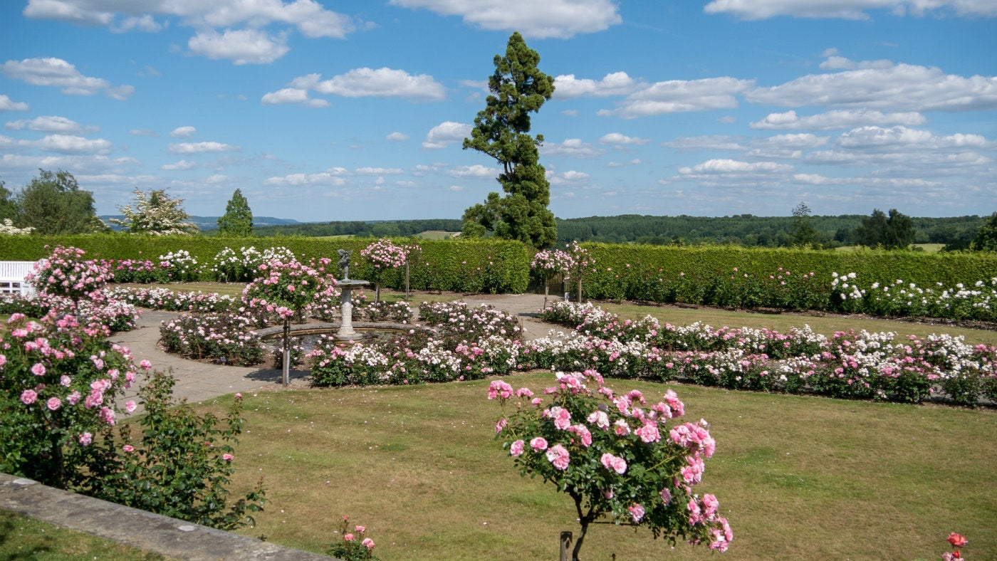 The rose garden at Emmetts Garden, a National Trust place in Kent