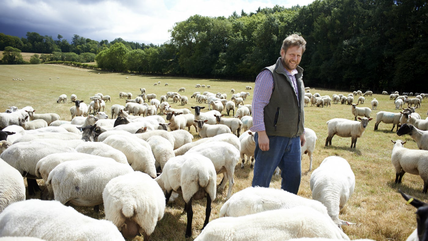 Farmer Steve Conisbee in a field surrounded by sheep