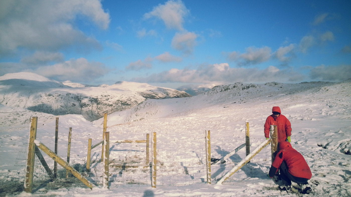 Two rangers build a fenced structure on a bright snowy day in the high fells
