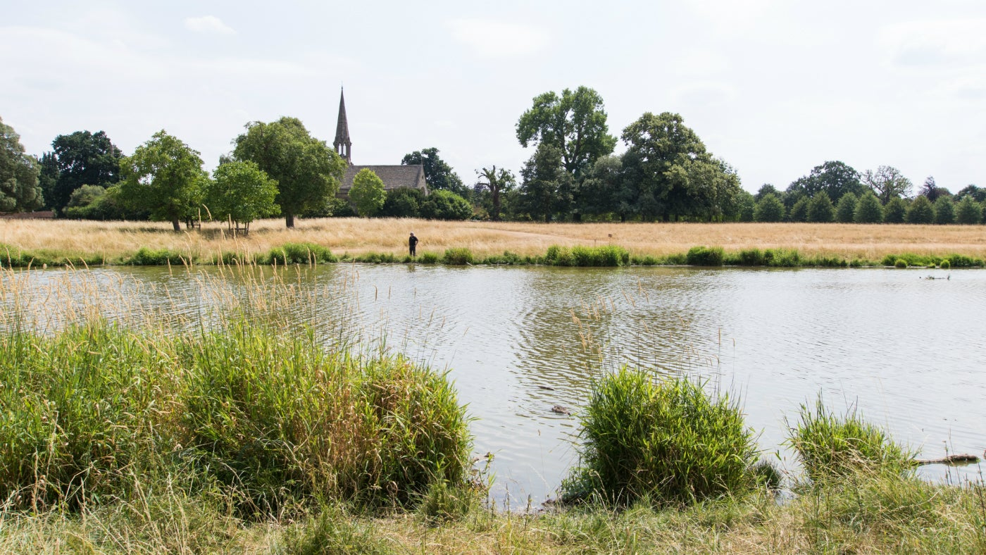 Take a walk through Charlecote's parkland this summer for beautiful views