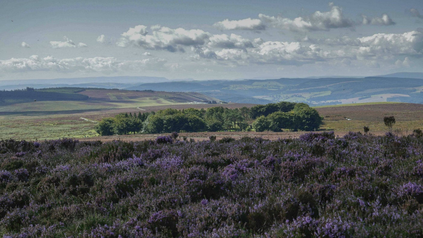 Views over the purple heather of open moorland