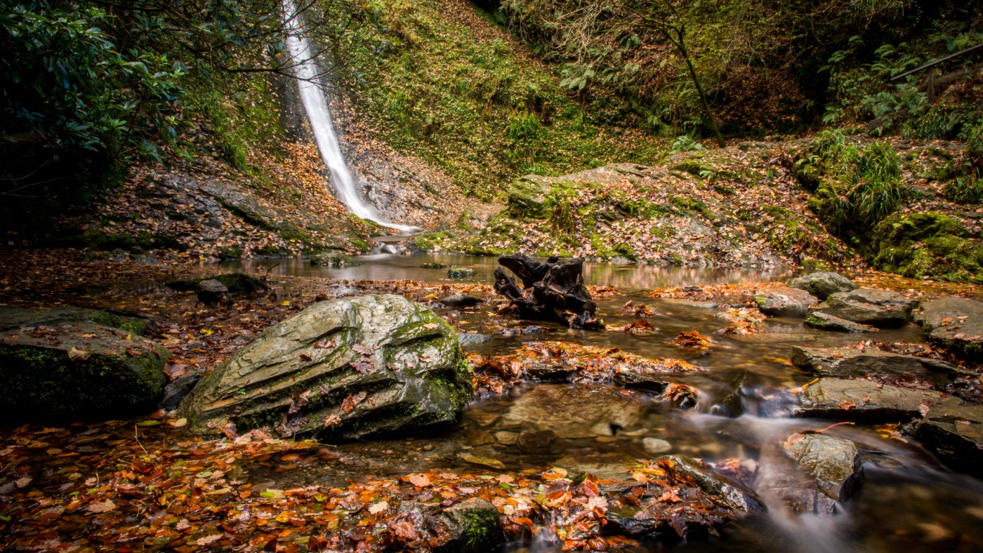 The Whitelady Waterfall with a covering of golden brown leaves