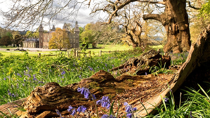Bluebells at Dinefwr with Newton House in background