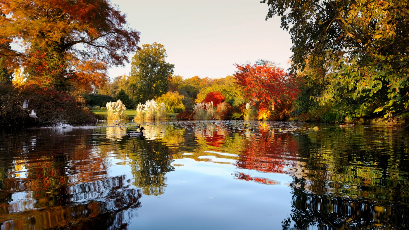 Wakehurst in autumn