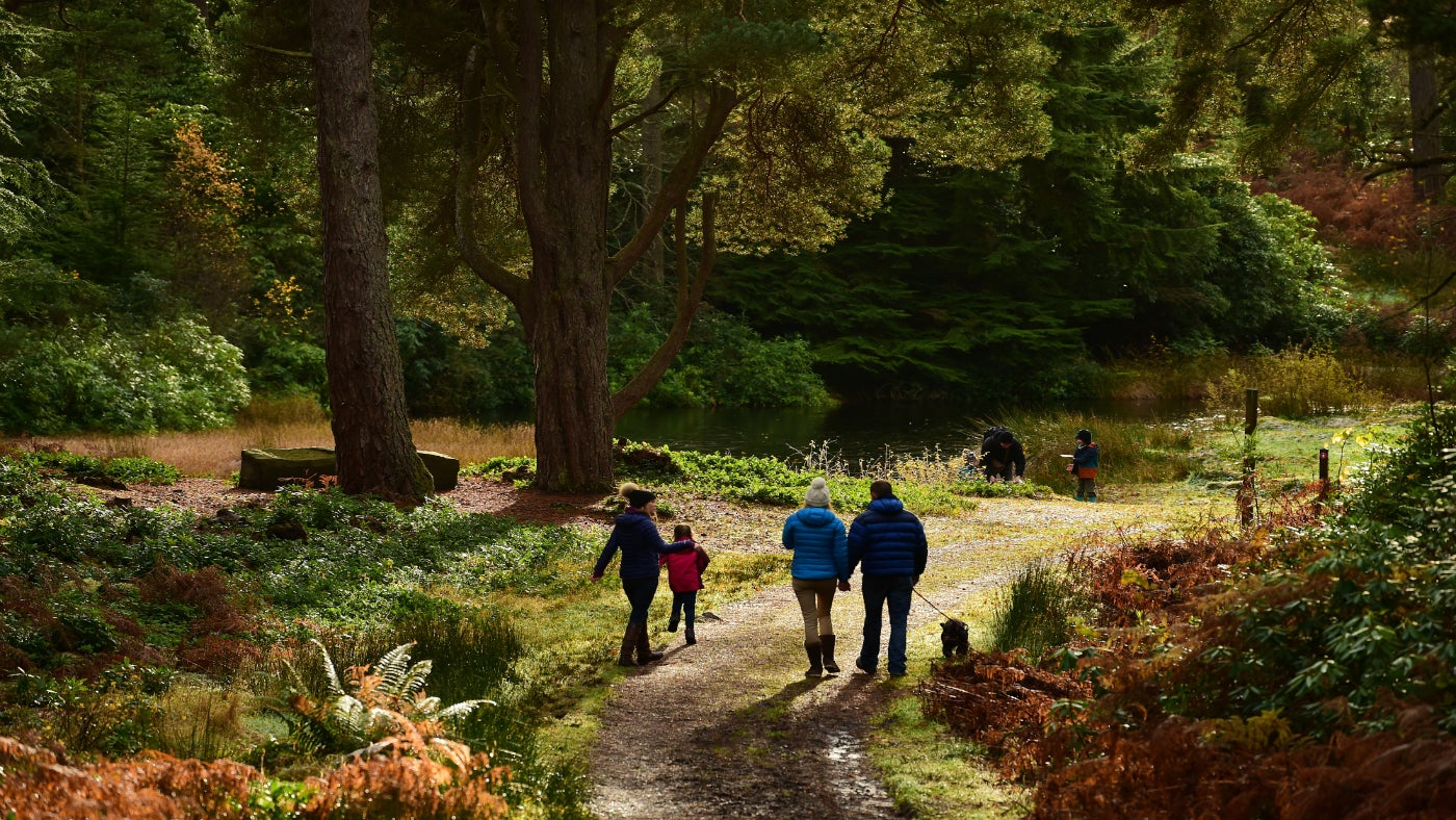 A family walking through the woodland