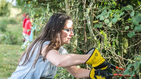 Volunteers removing brambles to prepare for hedge-laying