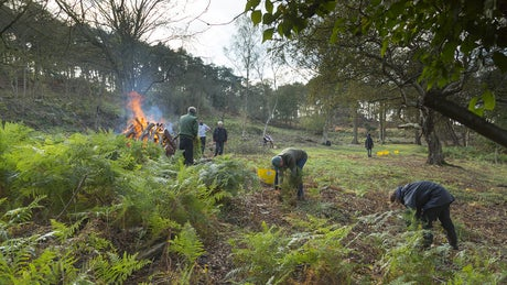 Staff and volunteers clearing woodland on Brownsea Island