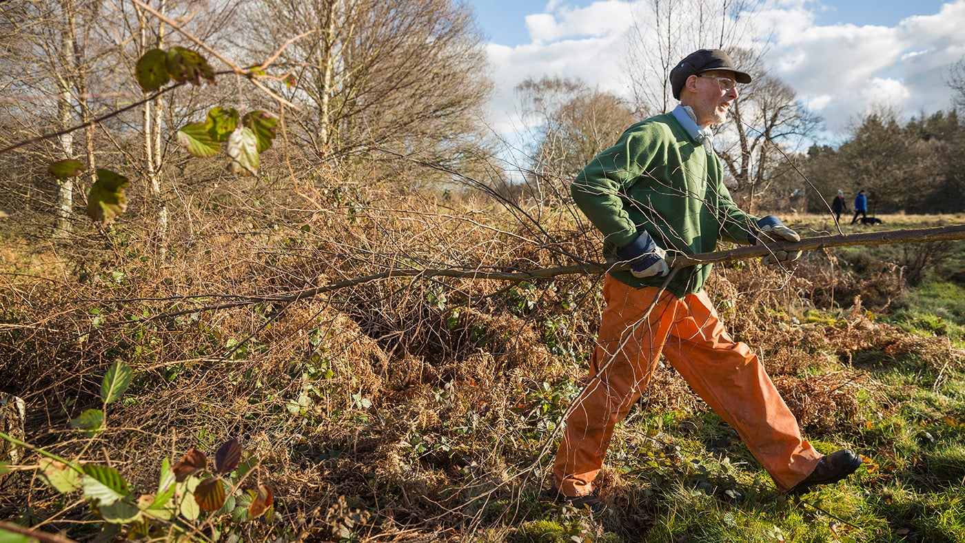 Volunteer clearing scrub on a working holiday