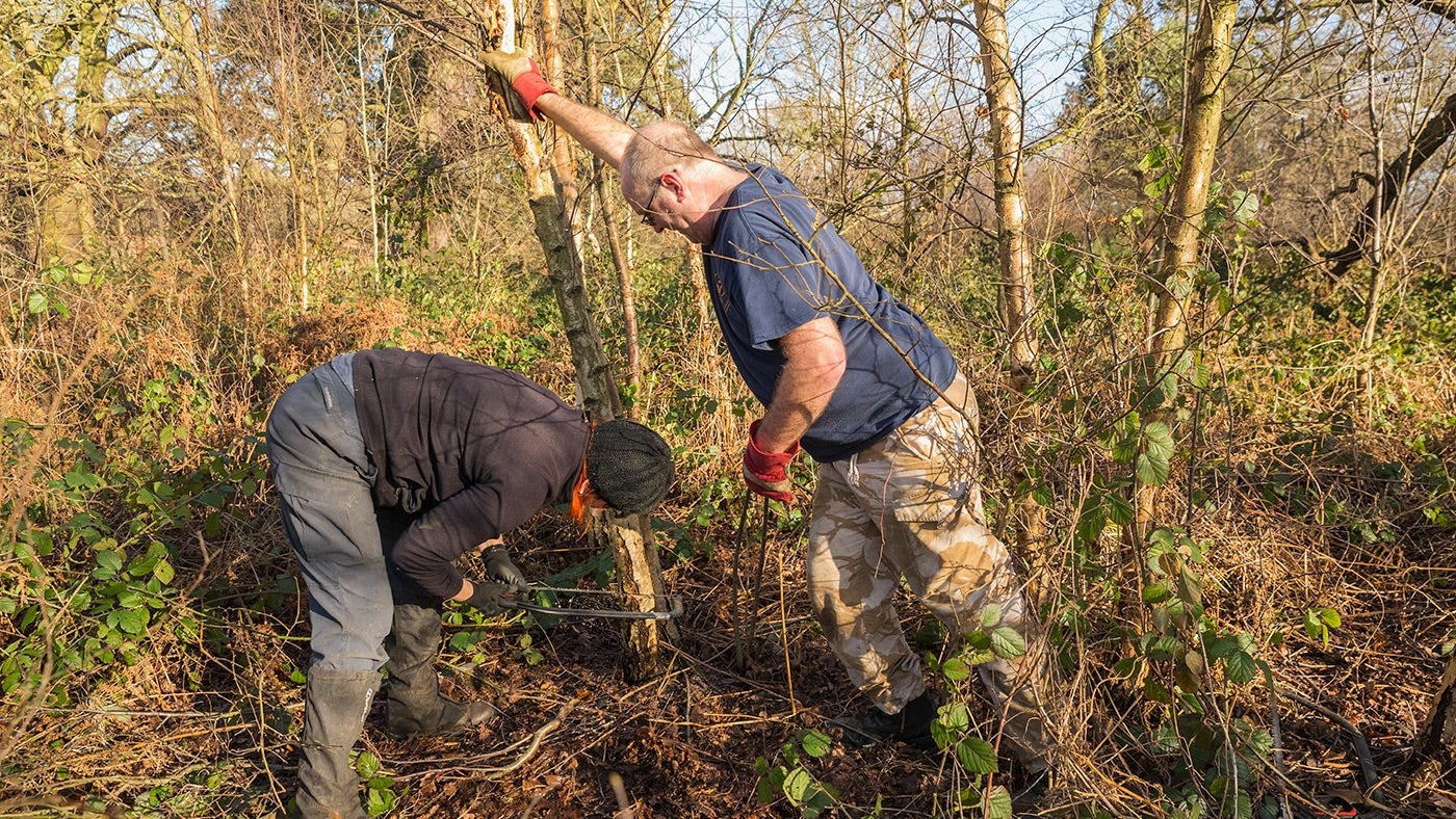 Volunteers clearing vegetation on a working holiday
