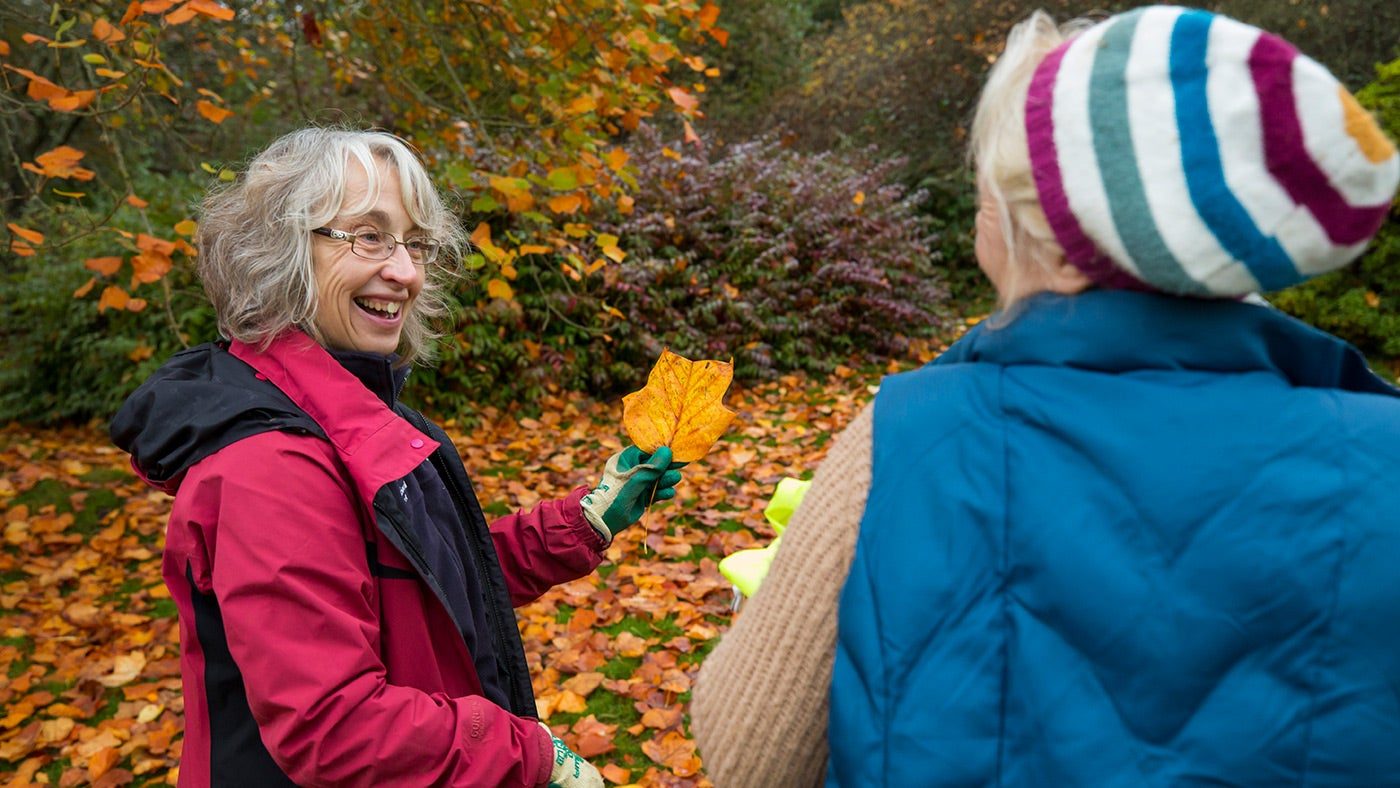 Volunteers clearing autumn leaves
