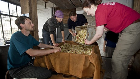 Volunteers making cider at Killerton House, Devon