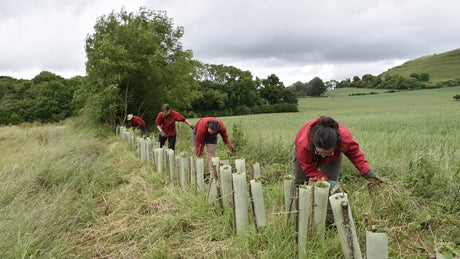 Volunteers weed around newly planted trees