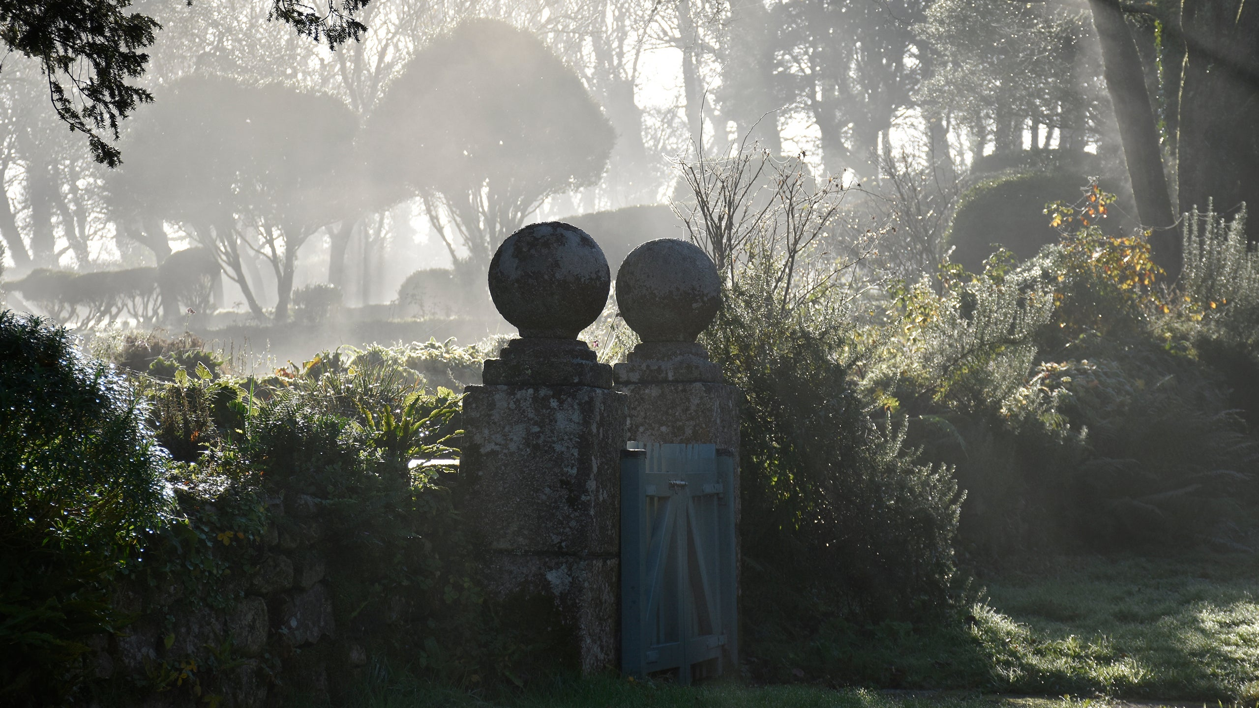 Early morning light in the garden at Godolphin, Cornwall