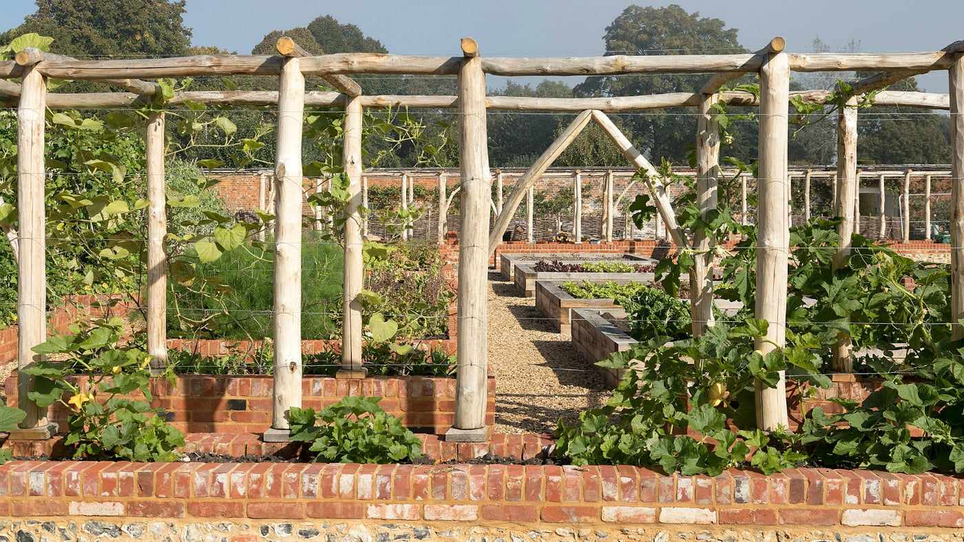 Wooden pergolas planted with growing gourds and vines in the Kitchen Garden at Mottisfont
