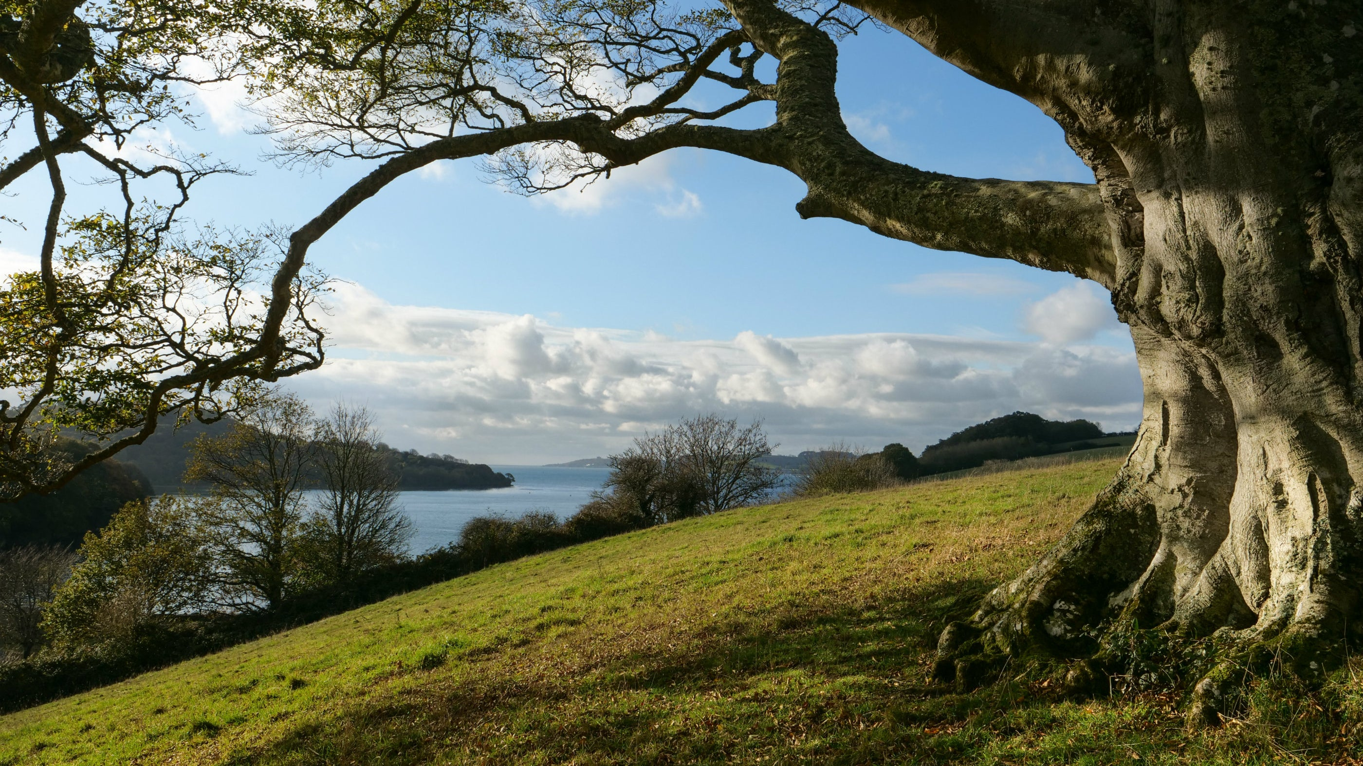 Views from the parkalnd at Trelissick, Cornwall