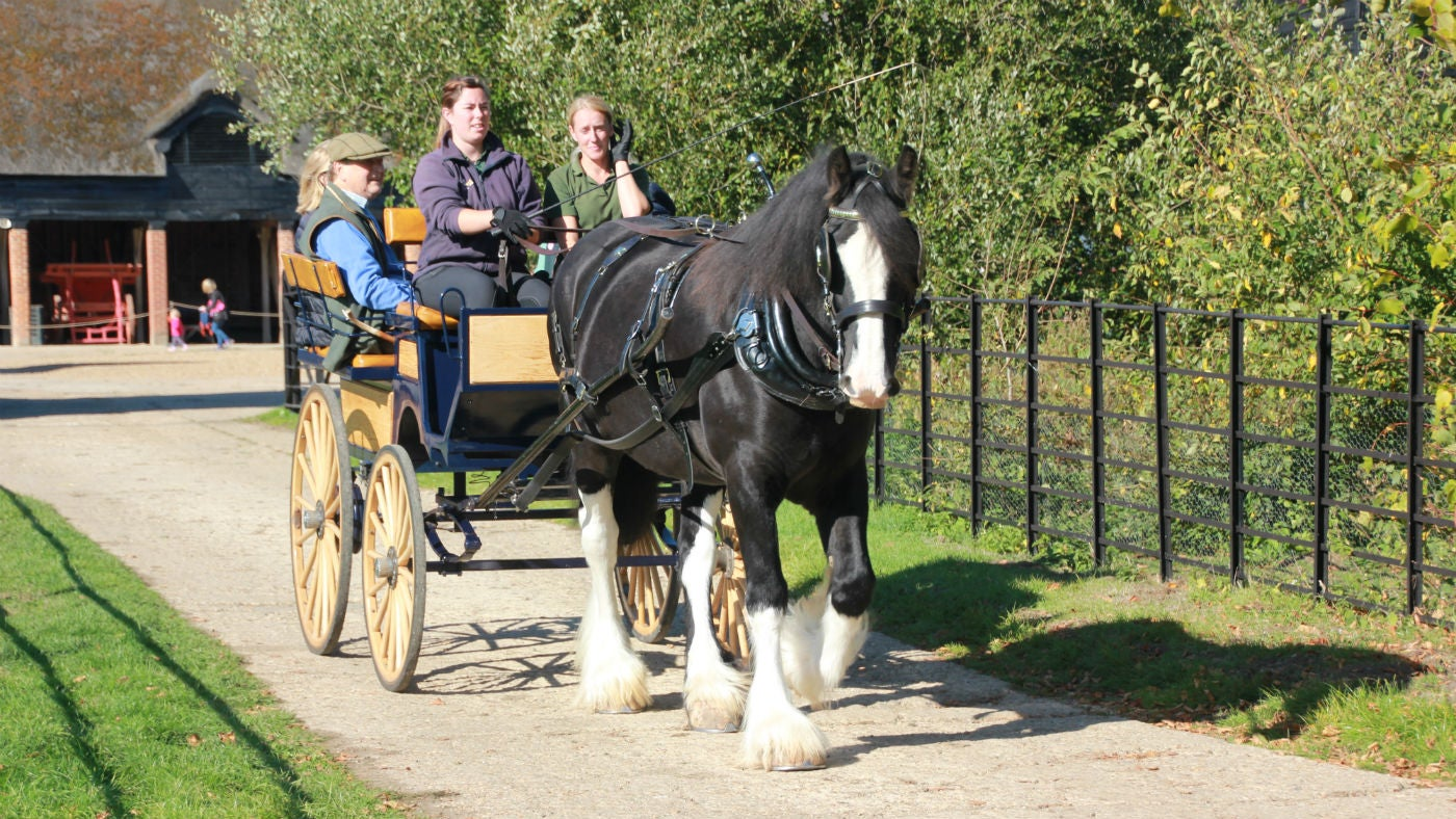 Carriage Ride at Wimpole