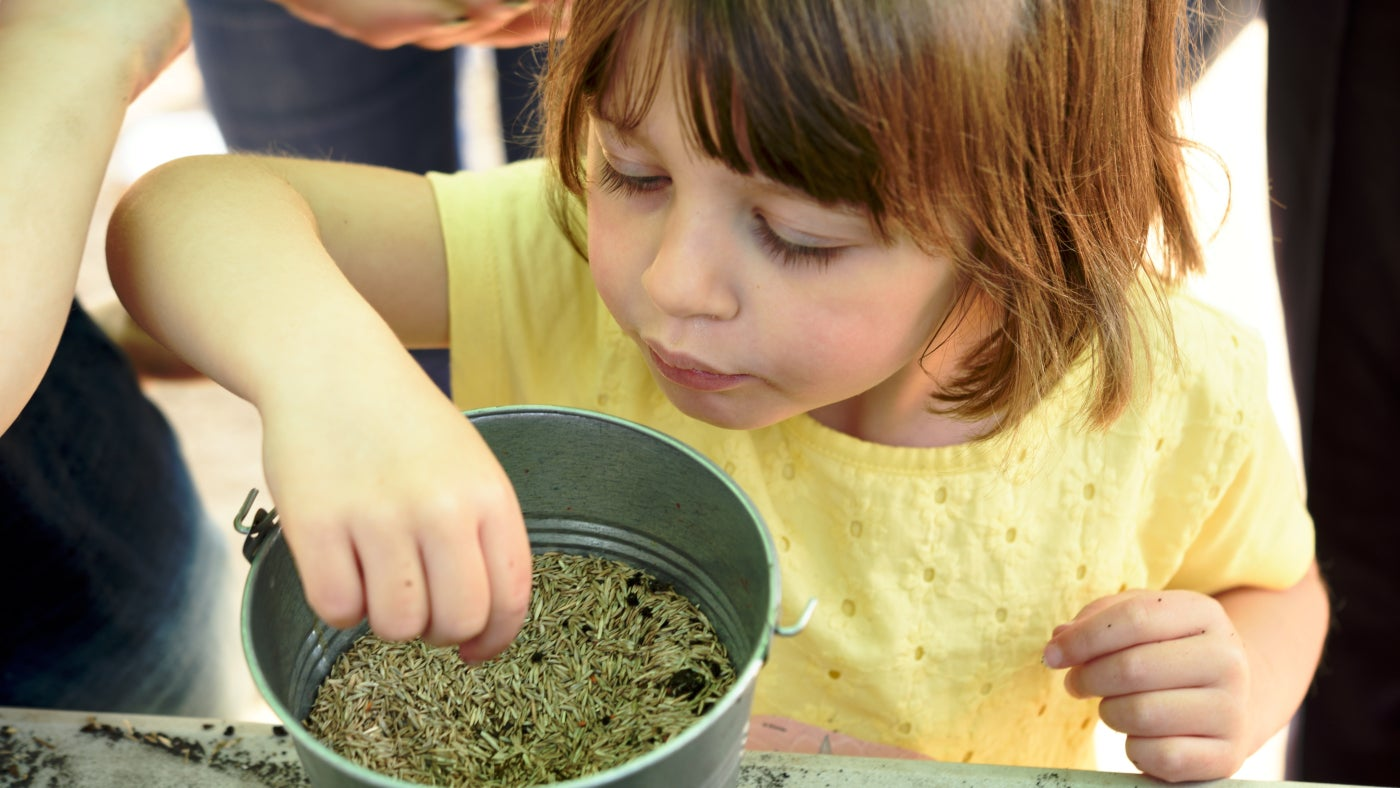 A child taking a pinch of seeds