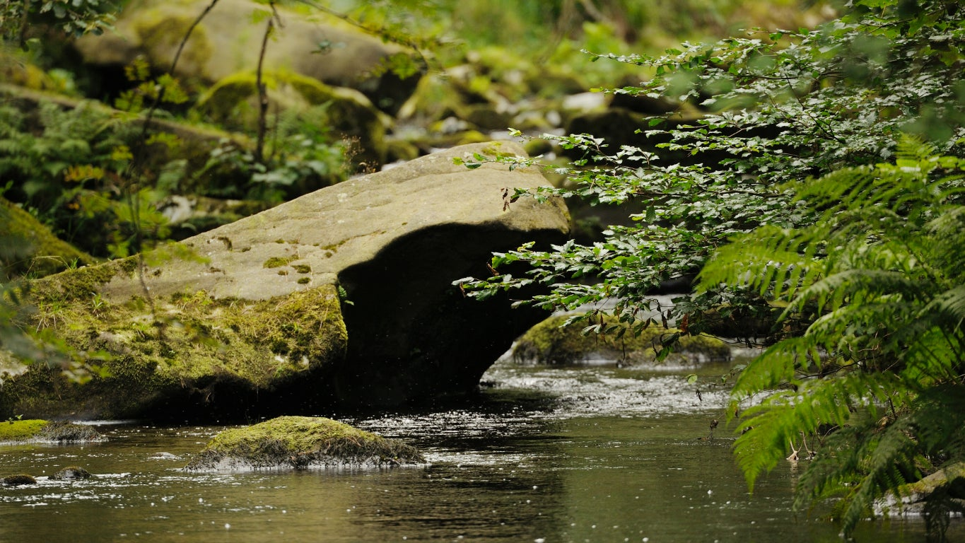 A stream at Hardcastle Crags in West Yorkshire