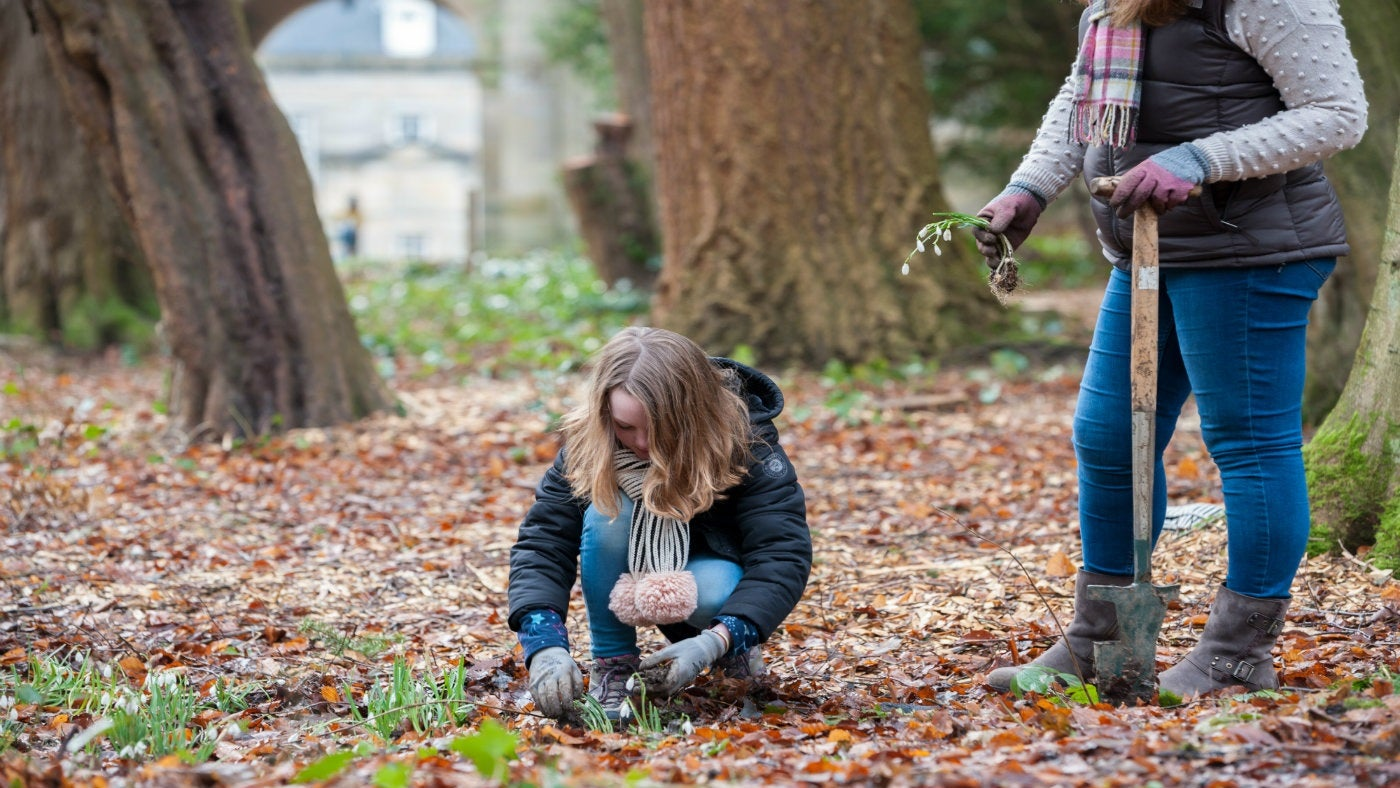 Mother and daughter planting snowdrops at Wallington