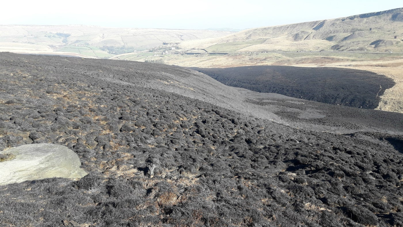 Marsden Moor after the fire
