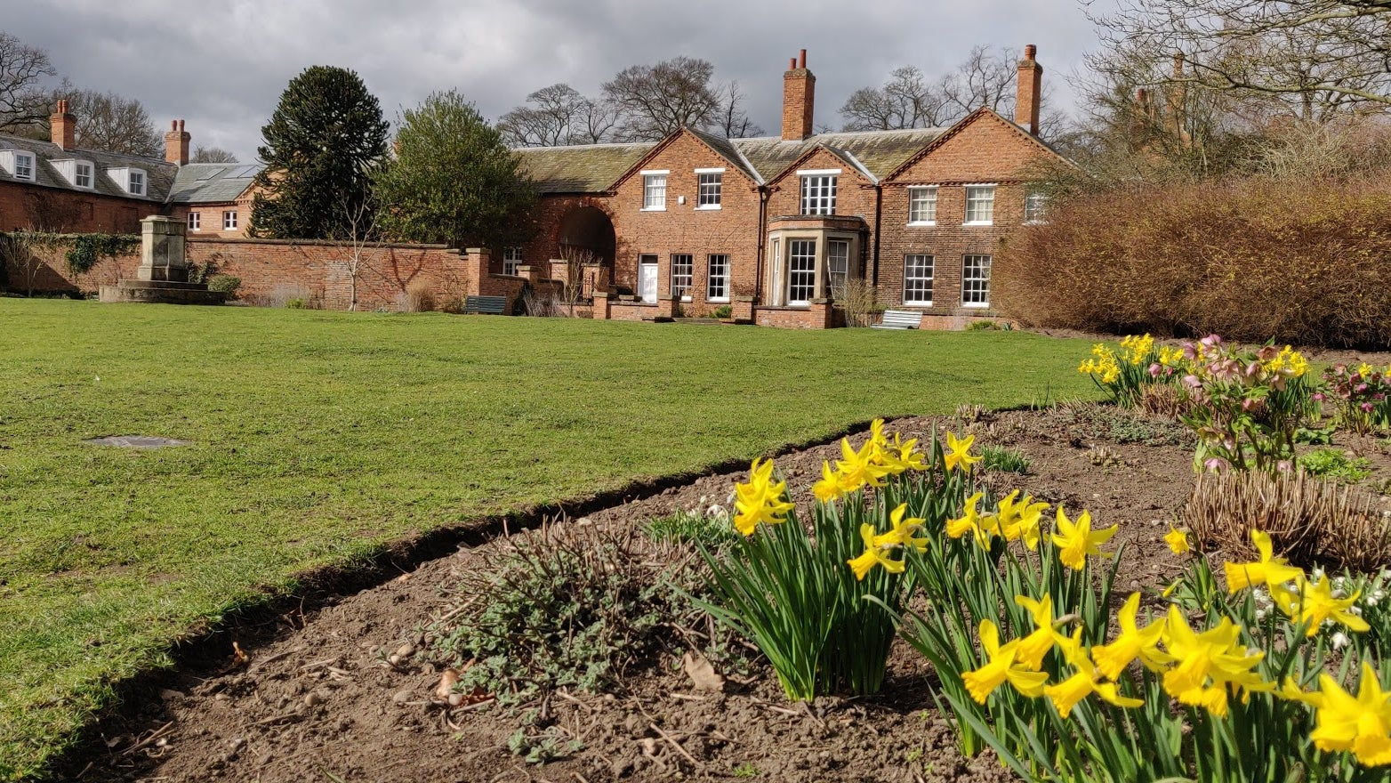 Daffodils in front of the Parsonage at Clumber Park
