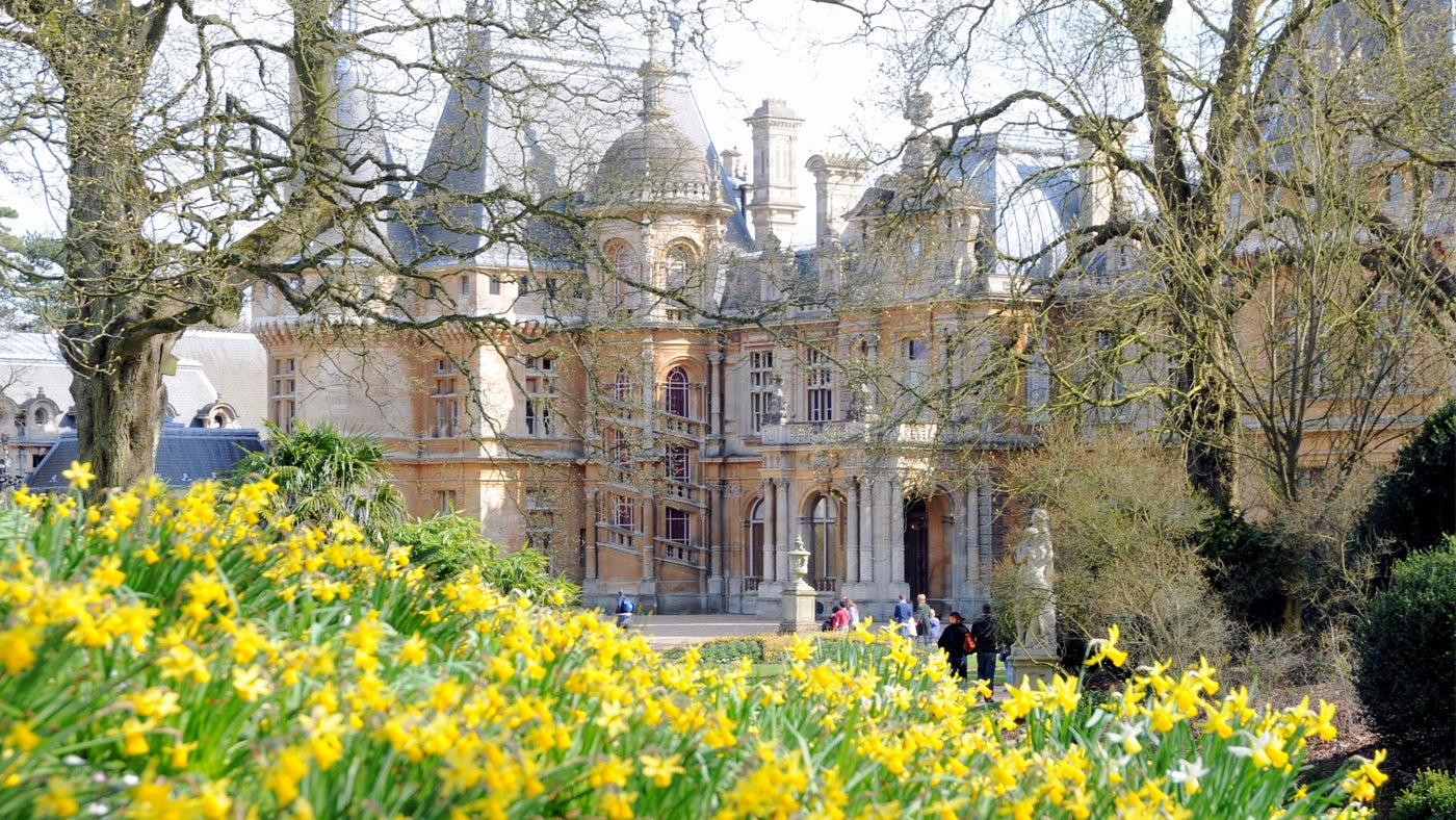 Daffodils outside Waddesdon Manor, a National Trust property in Buckinghamshire