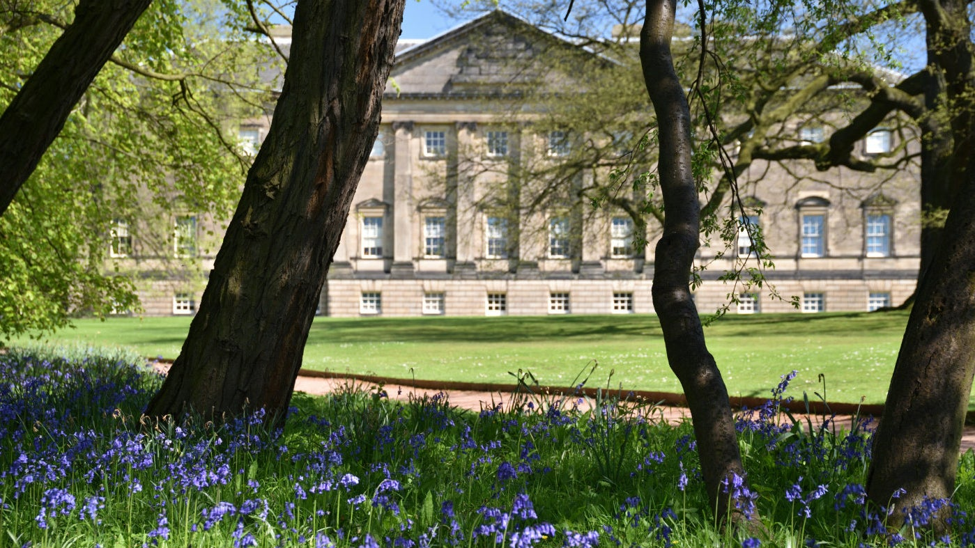 Bluebells at Nostell, near Wakefield
