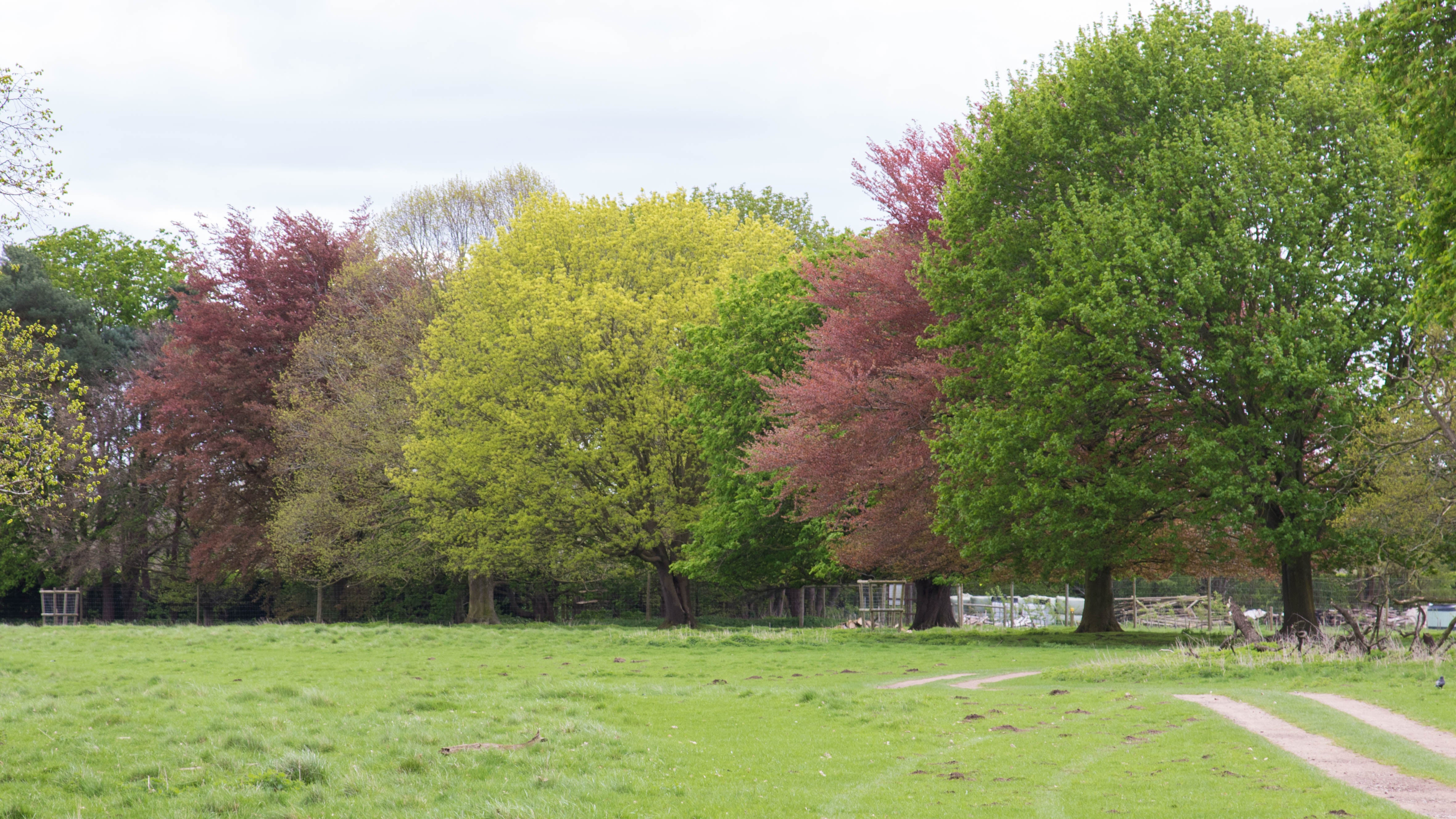 Charlecote Park's trees are a colourful sight in spring, not just autumn