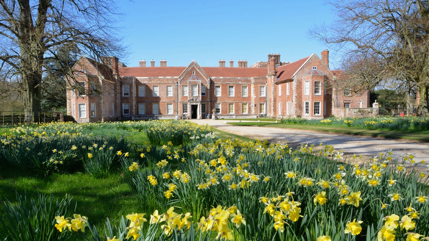 The Vyne house surrounded by daffodils.