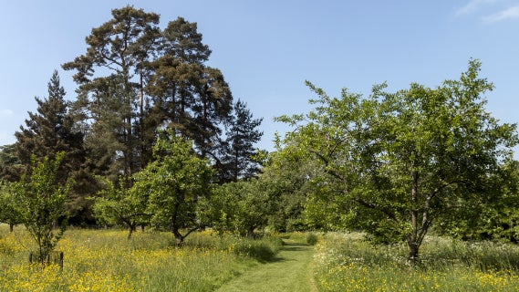 Orchard of wildflowers and fruit trees with path mown through centre