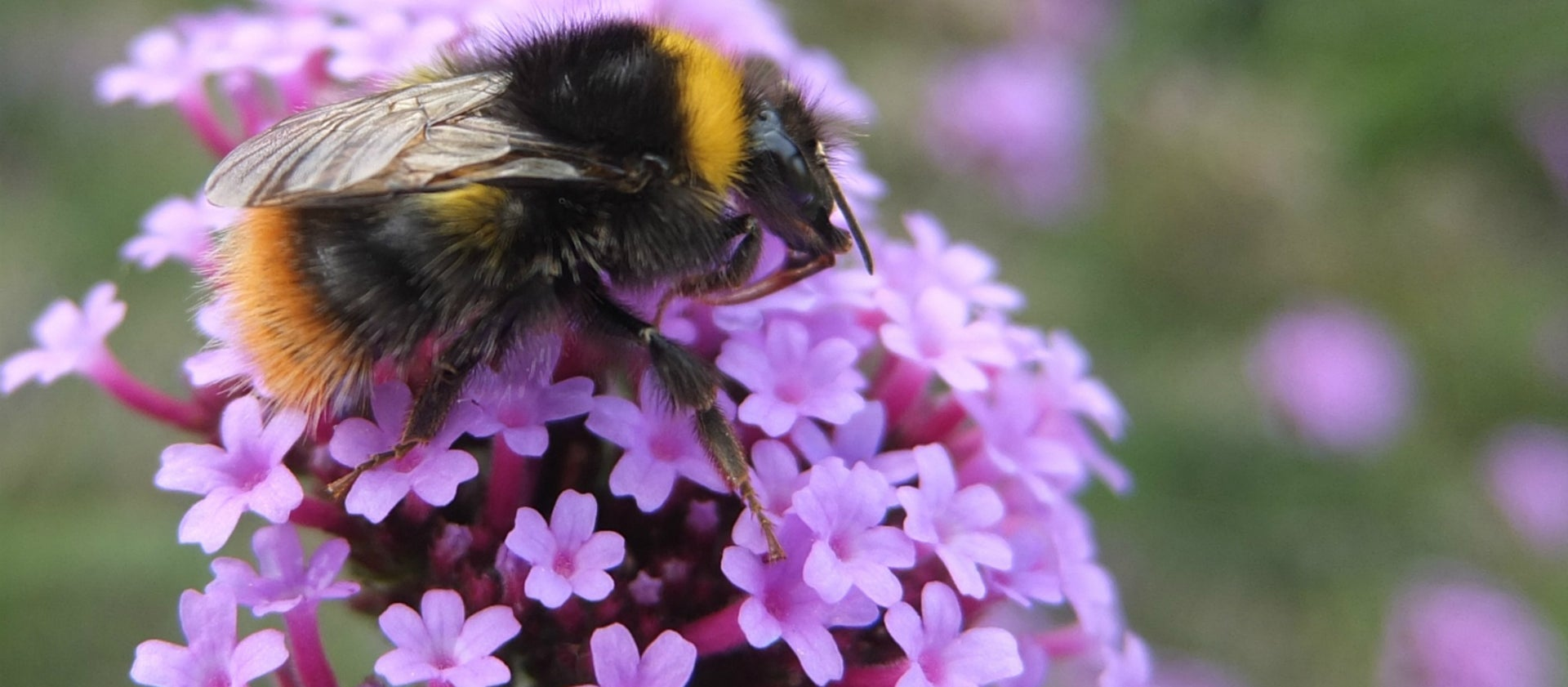 Busy Bees at Colby Woodland Garden | National Trust