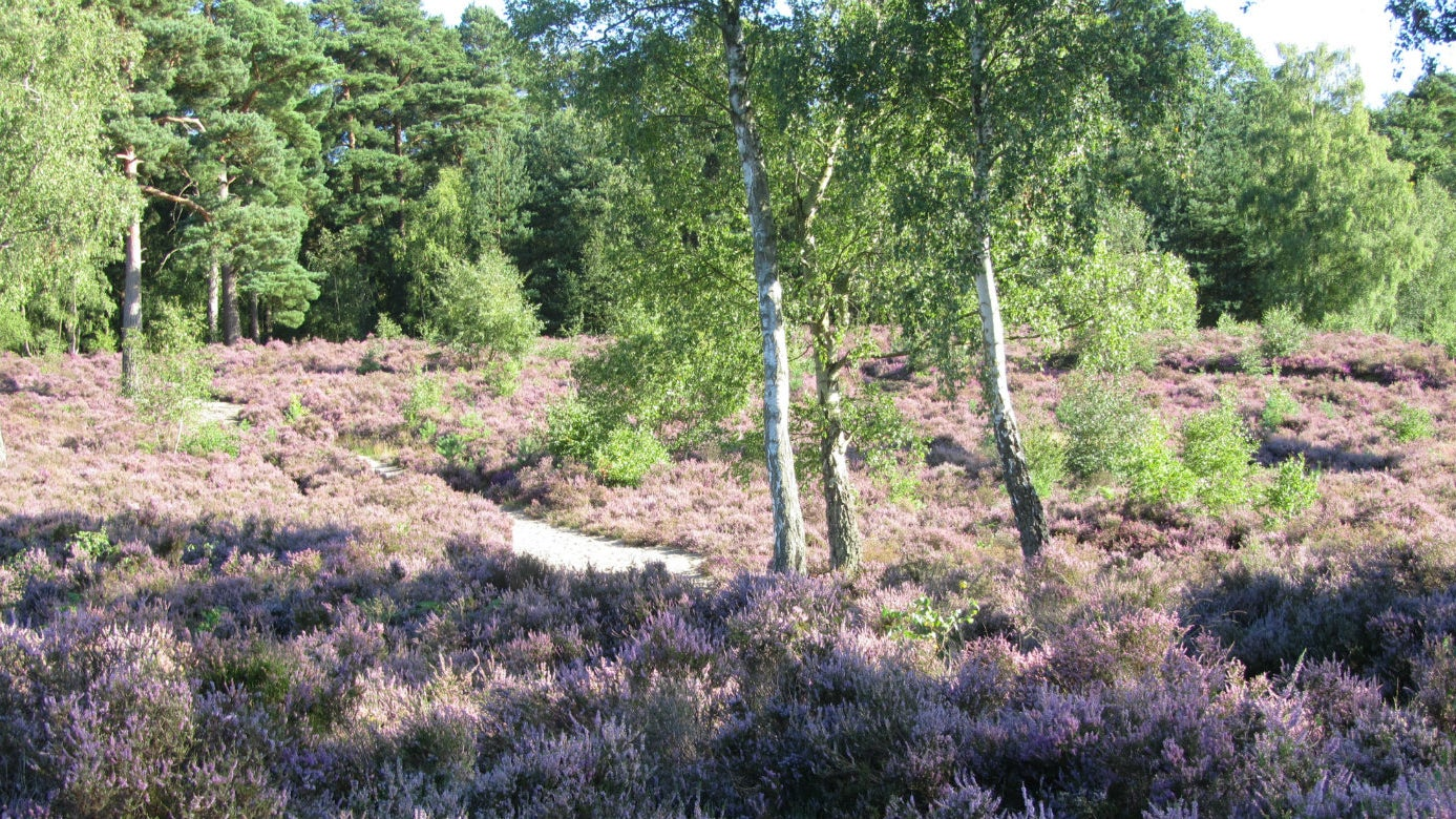 Expore our heather lined paths
