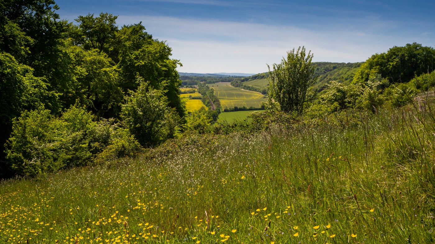 Enjoy the views from Denbies Hillside