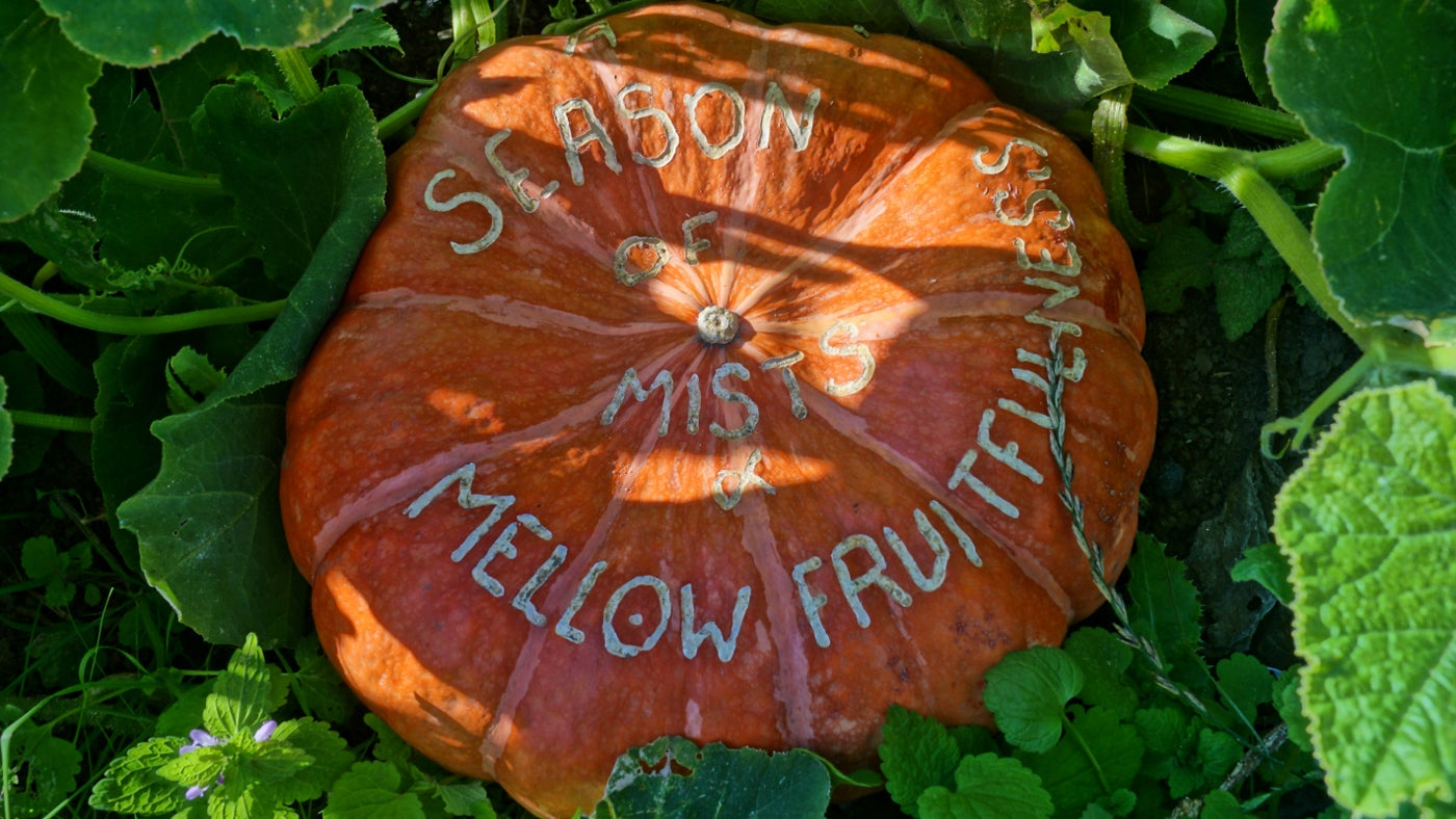 A pumpkin, part of a harvest display in the Walled Garden
