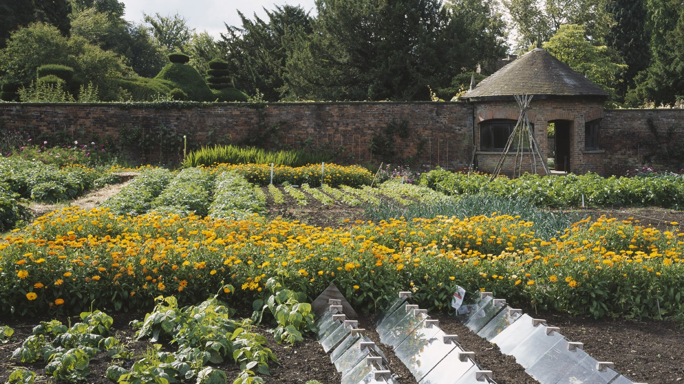 Our top kitchen gardens | National Trust