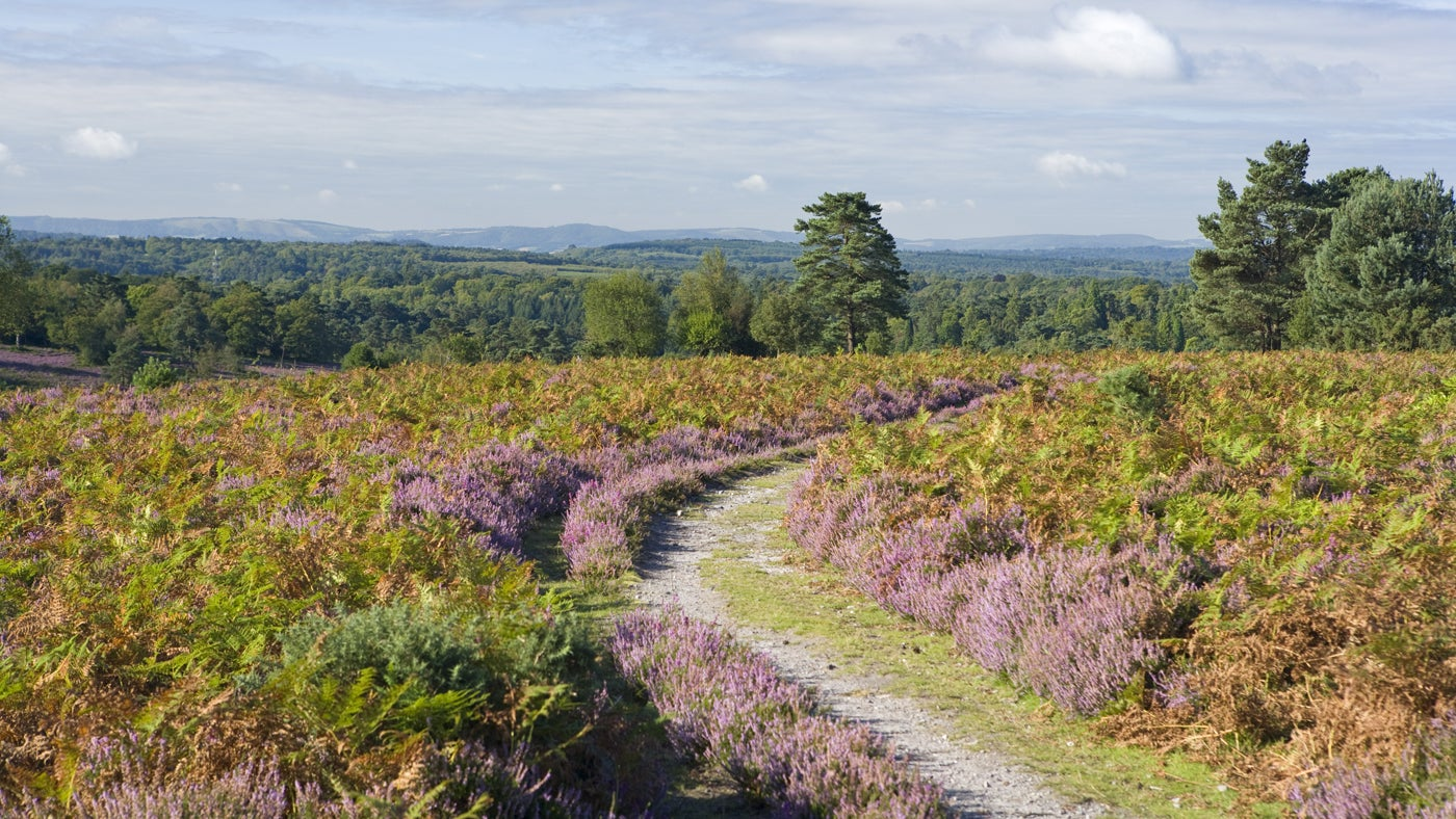 Track towards Black Down, from Hindhead Common, Surrey