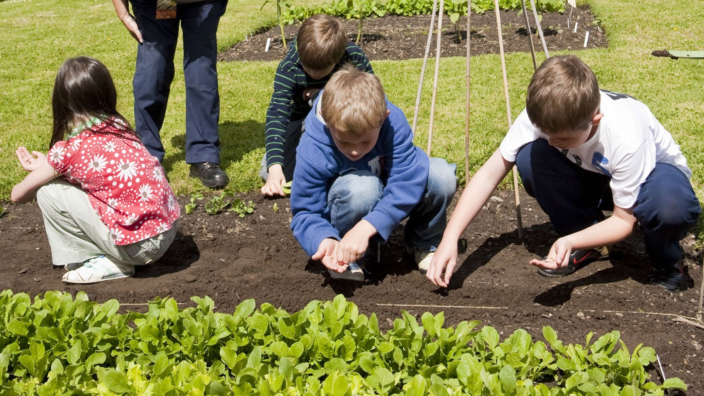 Children planting seeds in the walled garden at Gibside