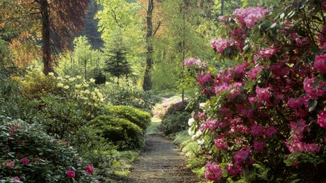 Woodland path at Colby Woodland Garden