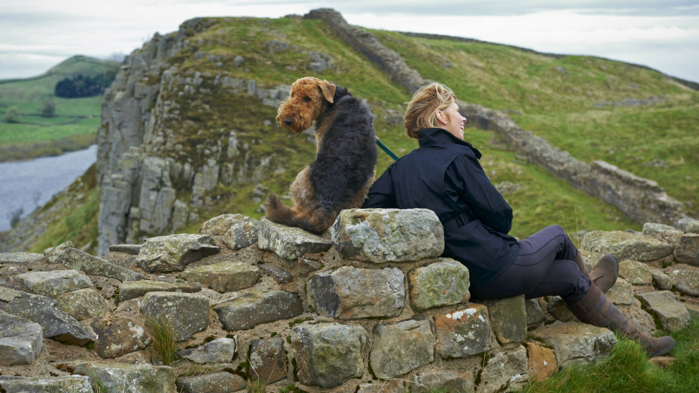 Dog sitting on wall with owner