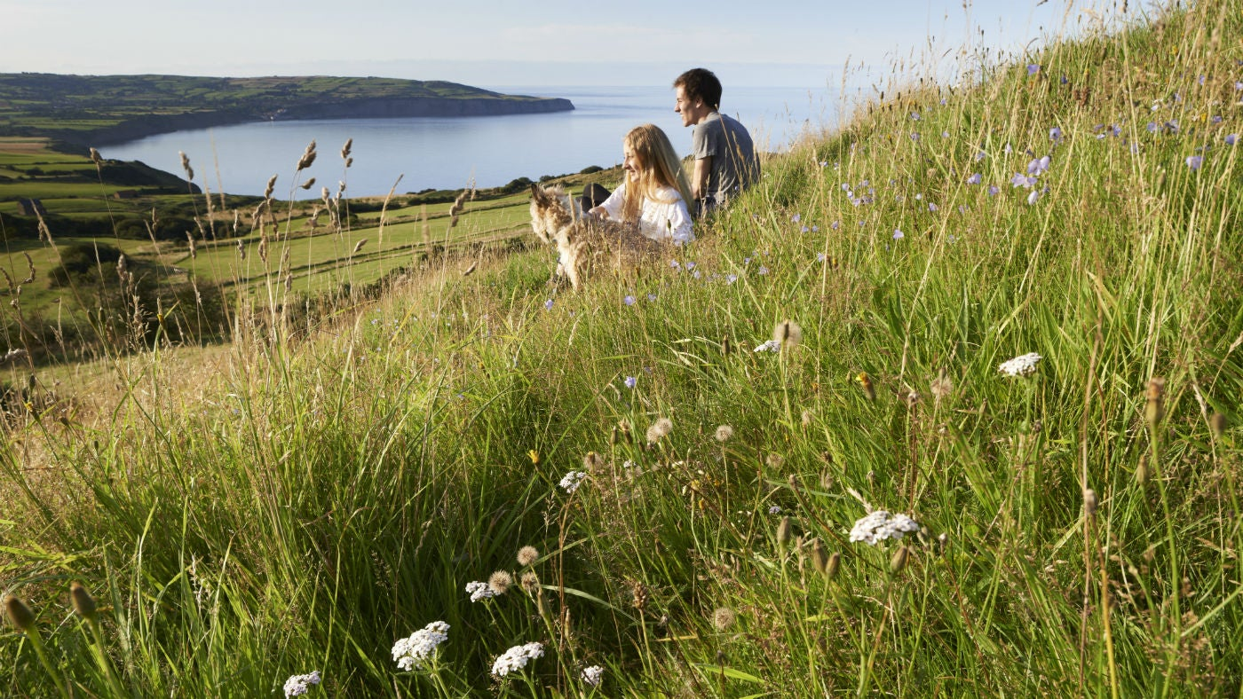 Walkers and their dog sit in a meadow at Ravenscar looking out over Robin Hood's Bay