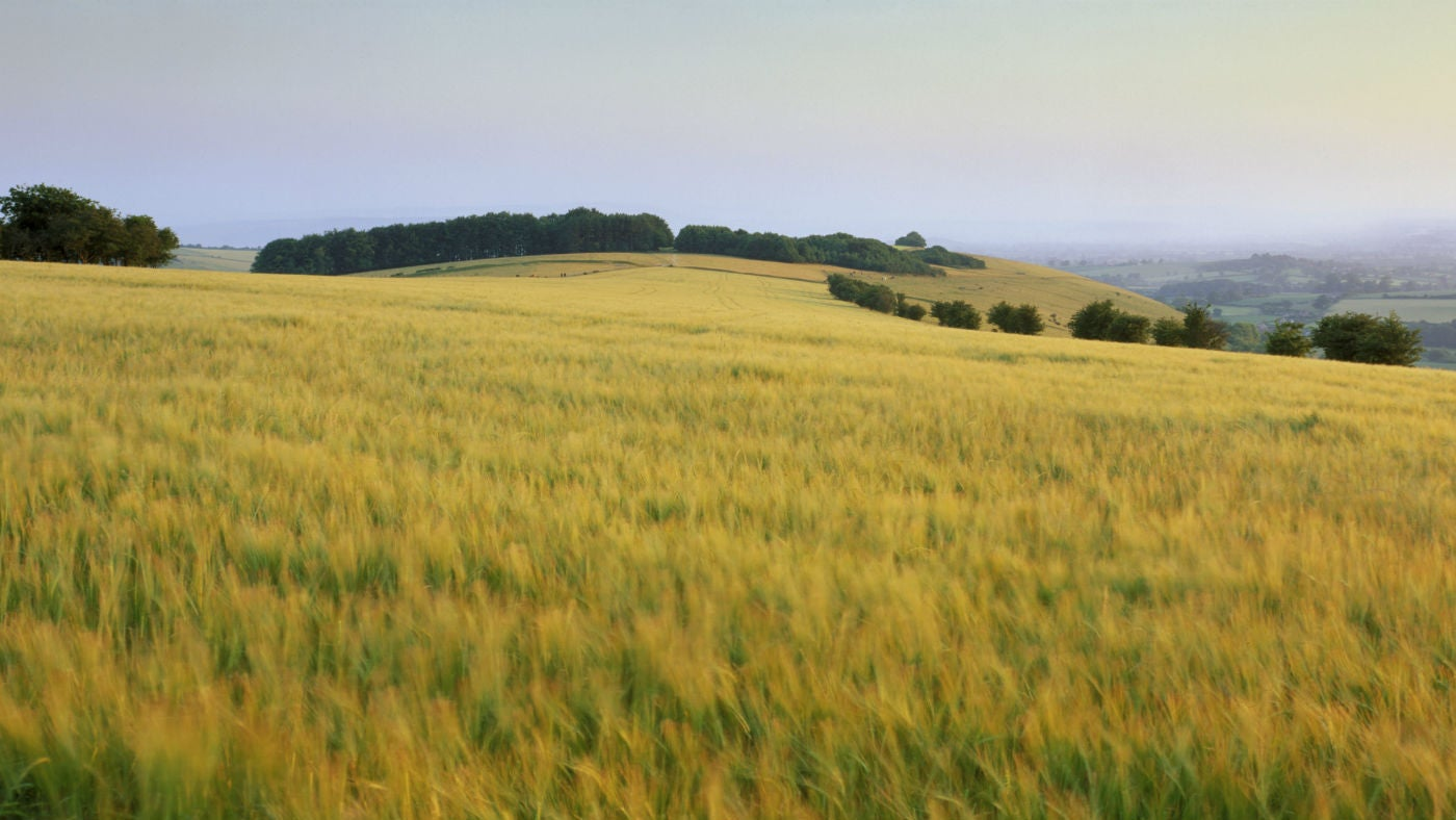 A view of a field of grass at the Fontmell Downs near Shaftesbury Dorset