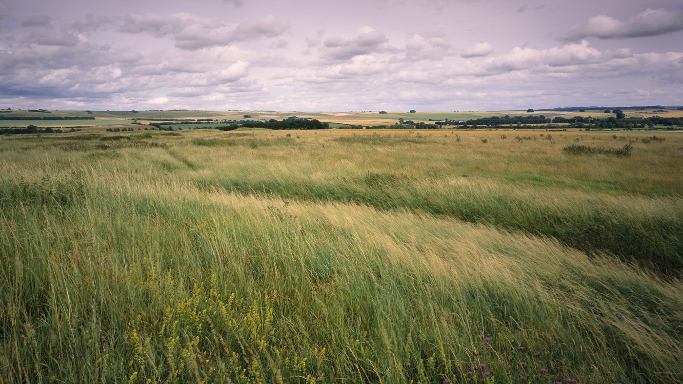 View of windswept long grass and cloudy sky from Windmill Hill, Avebury, Wiltshire