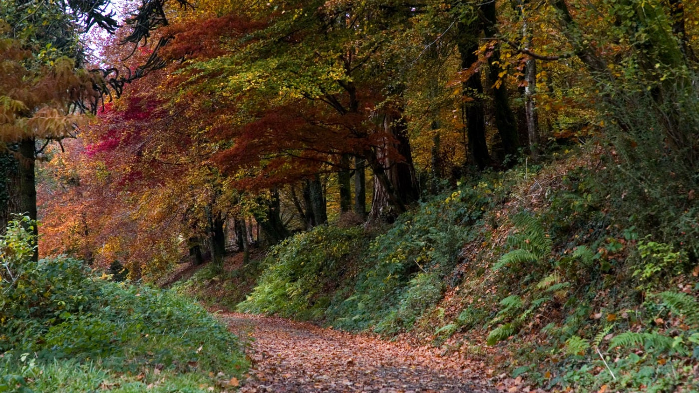 Colourful autumnal woodland at Arlington Court, North Devon