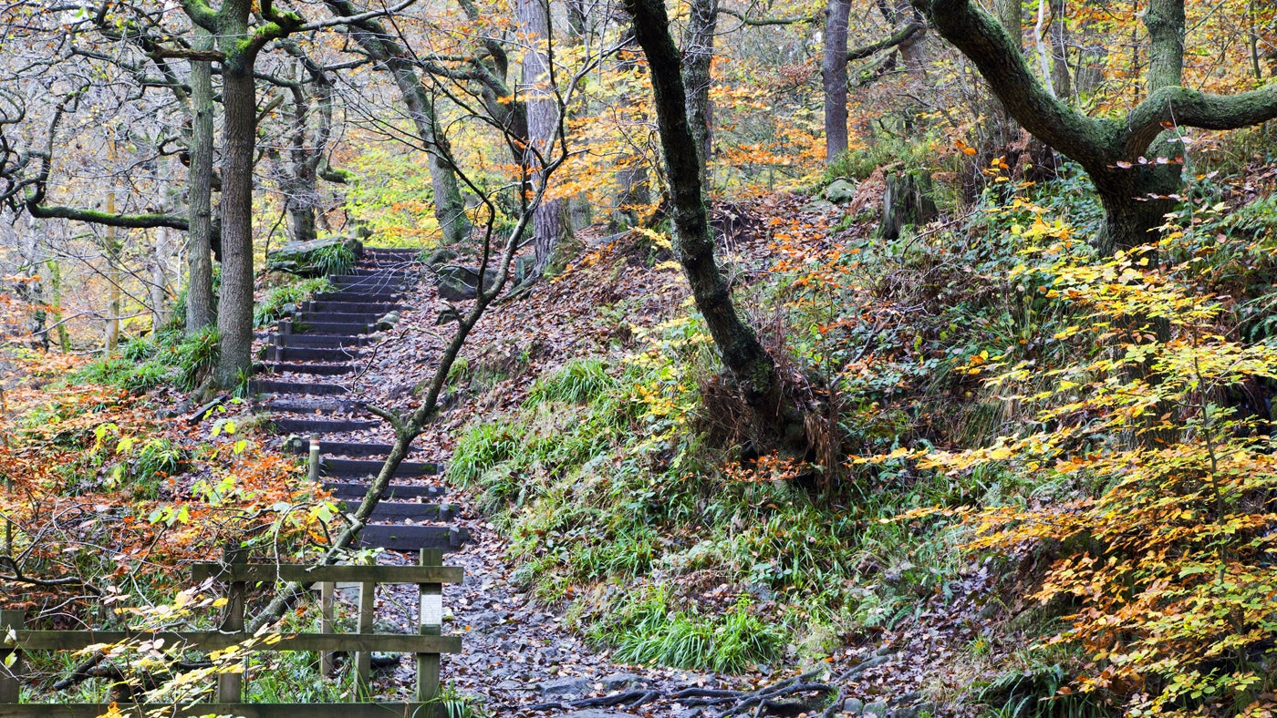 Wooden steps along the woodland trail at Craig Gwladys