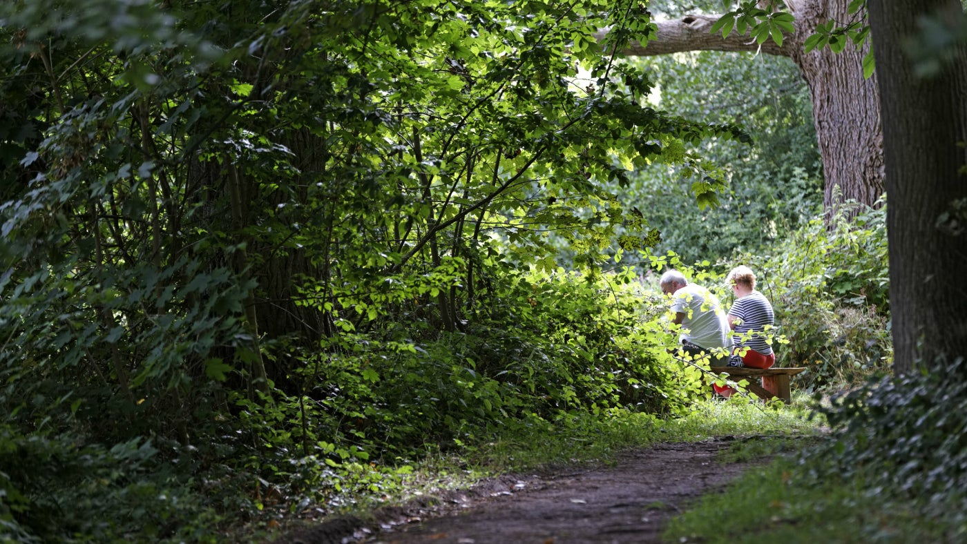 Visitors sat on a bench in the woodland at Dudmaston